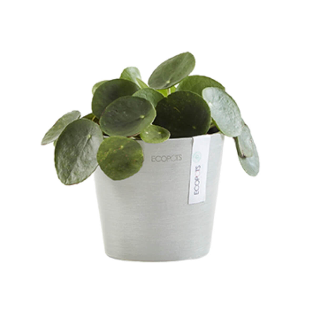 Medium Ecopots Amsterdam pot white with plant