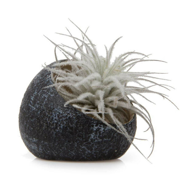 Pebble planter black