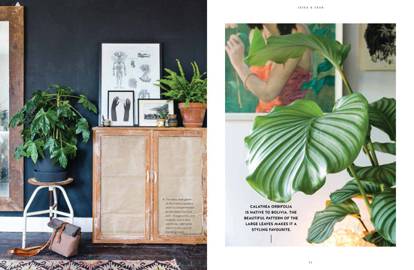"Open page of ""Urban Jungle: Living and Styling with Plants"" by Igor  Josifovic and Judith de Graaff"