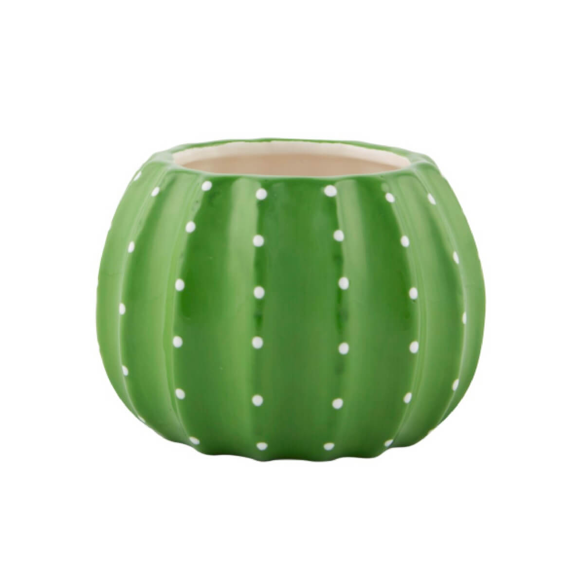Little green cactus planter