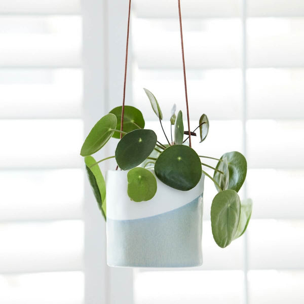The two-tone planter with a peperomia plant in hanging in front of white shutters