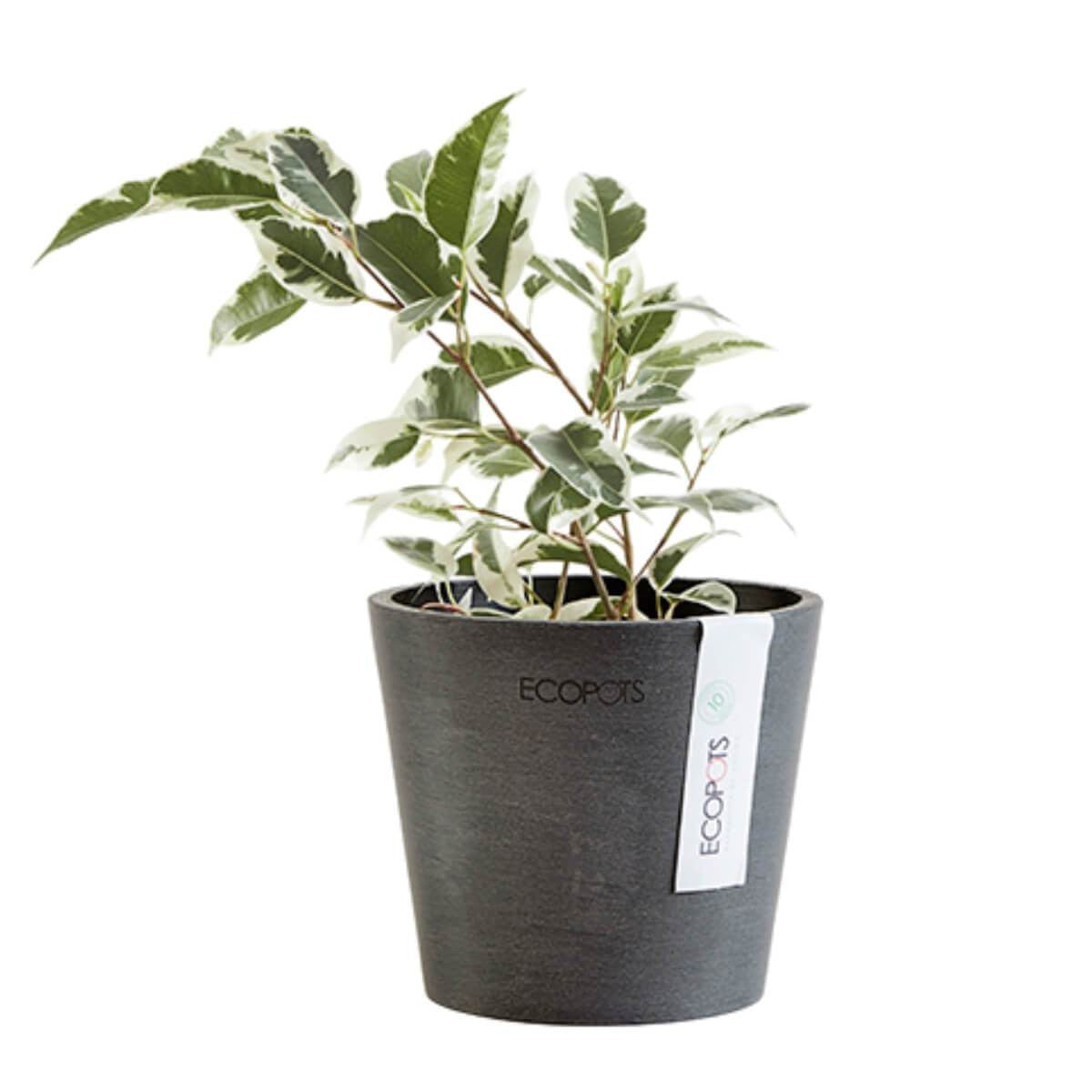 Ecopots Amsterdam pot 10.5 cm black with plant