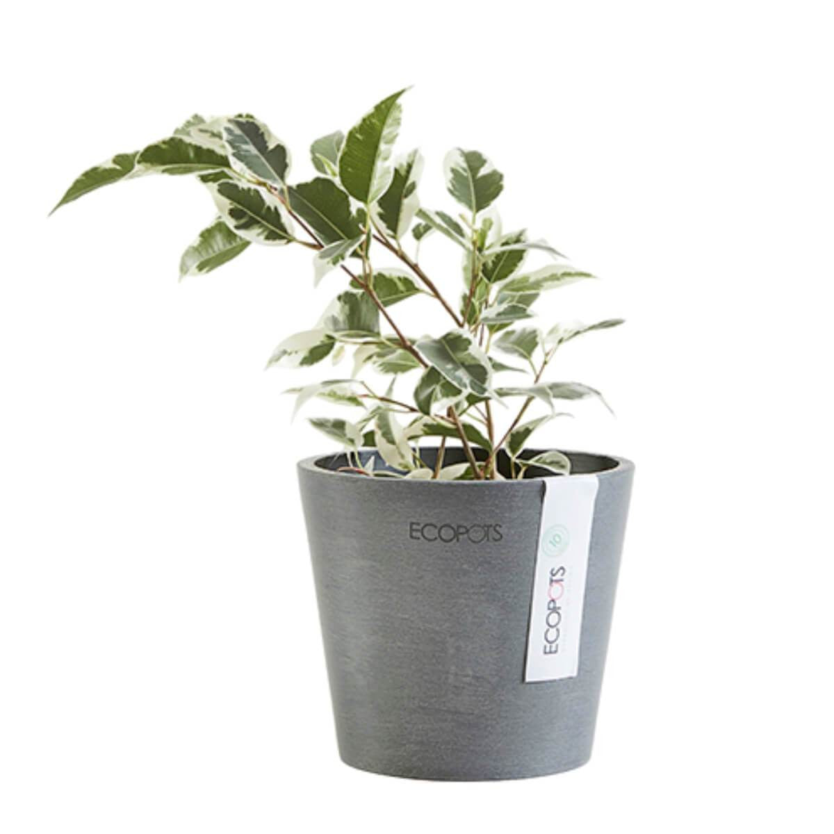 Ecopots Amsterdam pot 10.5 cm grey with plant