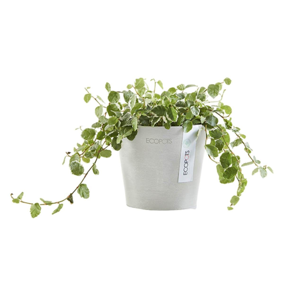 Ecopots Amsterdam pot 10.5 cm white with plant