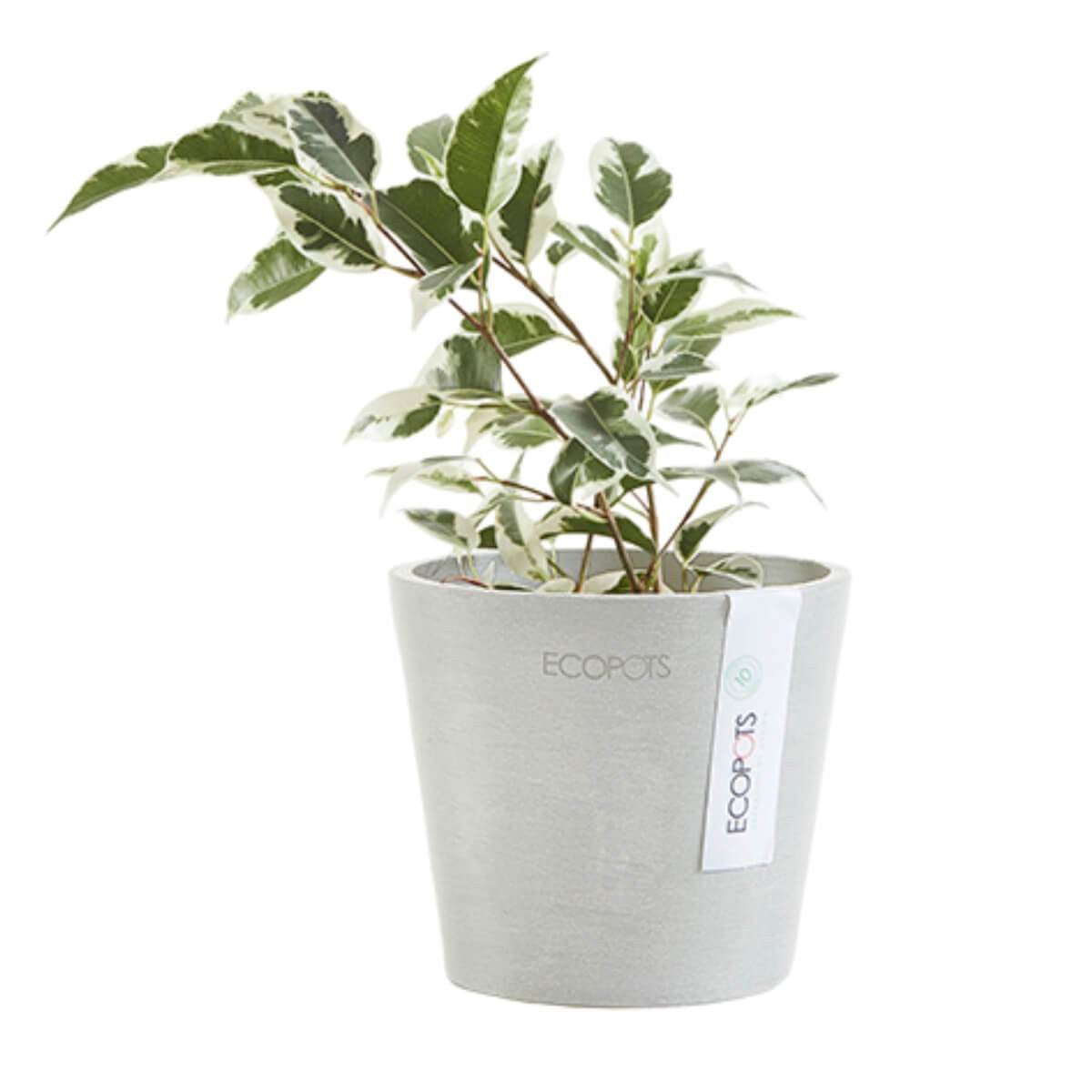 Ecopots Amsterdam mini pot