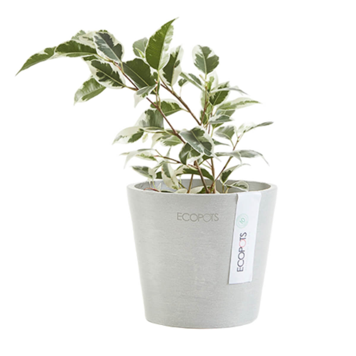 Ecopots Amsterdam small pot