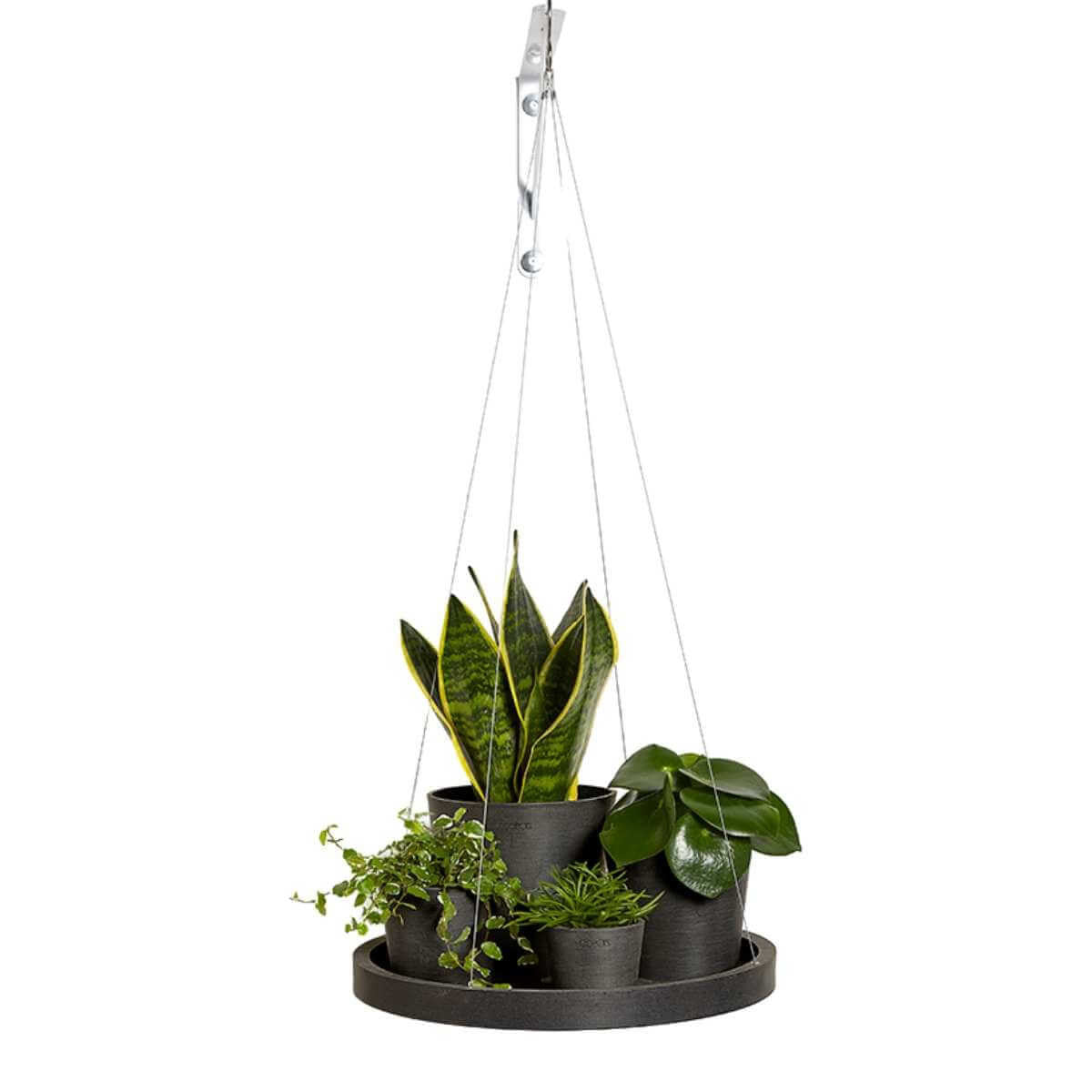 Hanging saucer with plants