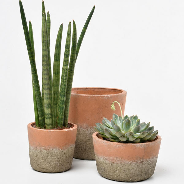 Three terracotta pots with plants
