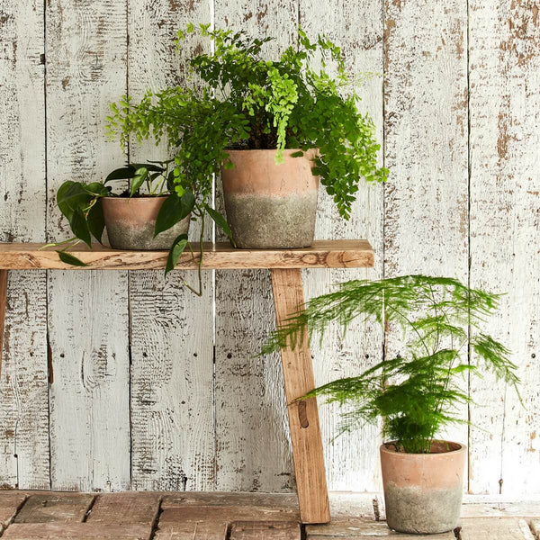 Three aged terracotta planters with plants arranged around a wooden bench with a wooden backdrop
