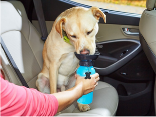 Special Water Bottle For Dogs
