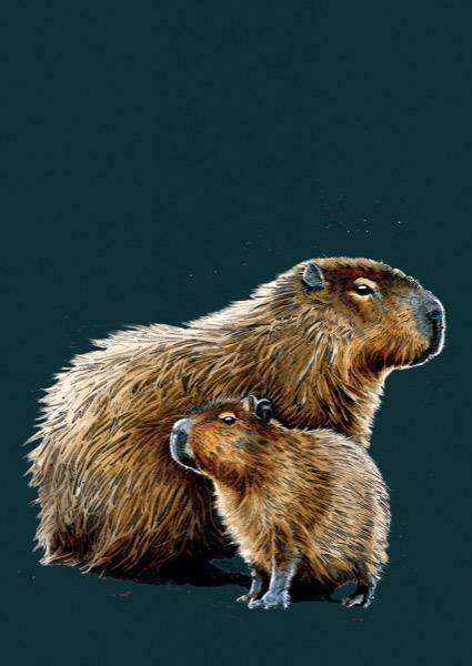The Capybaras A4 Art Print - Some Ink Nice - Animal Art, Cards and Gifts