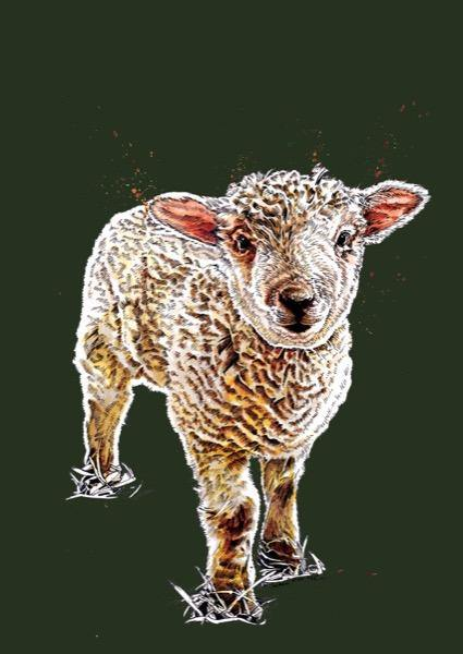 The Lamb A4 Art Print - Some Ink Nice - Animal Art, Cards and Gifts