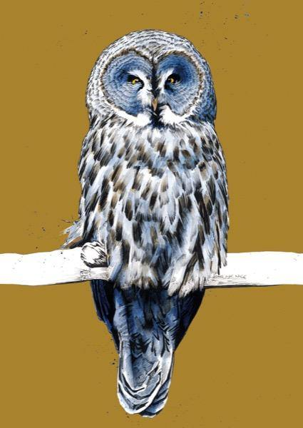 The Great Grey Owl A4 Art Print