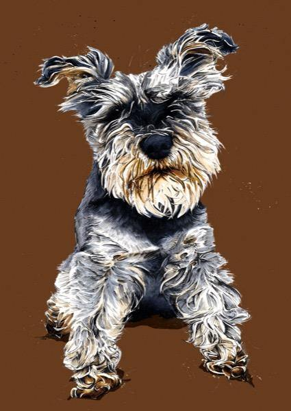 Ollie The Schnauzer A4 Art Print - Some Ink Nice - Animal Art, Cards and Gifts