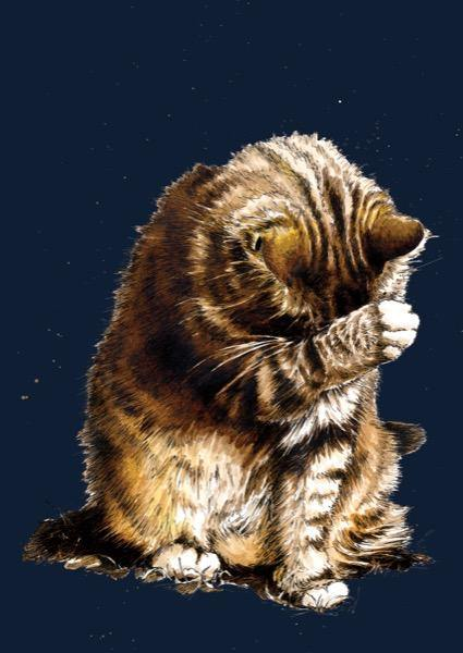 Small Fry The Cat A4 Art Print - Some Ink Nice - Animal Art, Cards and Gifts