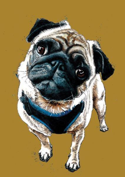 Teddy The Pug A4 Art Print