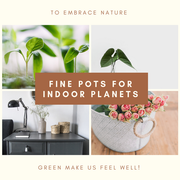 Pots, Planters & Container Accessories