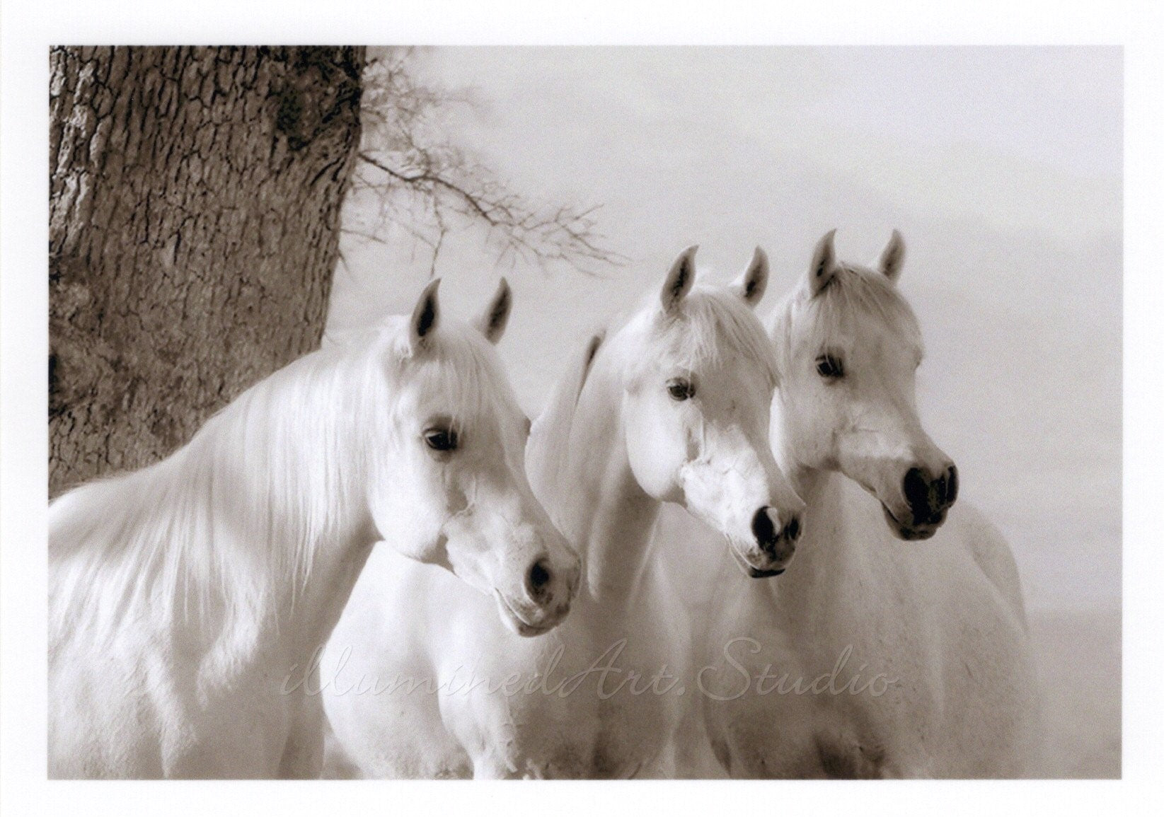 White Beauties