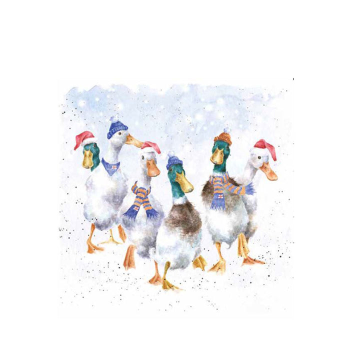Christmas Quackers, Pack of 8 Christmas Cards