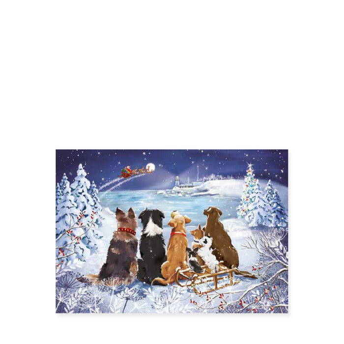 Christmas Tails, Pack of 8 Christmas Cards