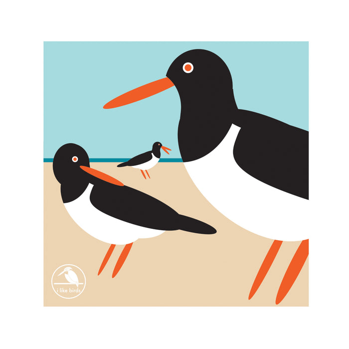 I Like Birds Oyster Catcher Boxed Notecards