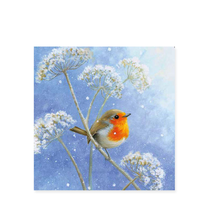 Winter Robin, Pack of 8 Christmas Cards