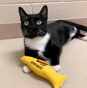DONATE a YEOWWW Catnip Toy to a Shelter Cat