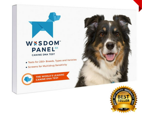 Wisdom Panel Canine DNA Kit