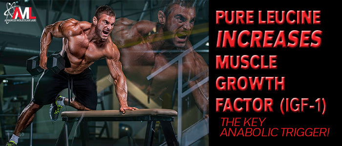 PURE LEUCINE INCREASES MUSCLE GROWTH FACTOR (IGF-1): The Key Anabolic Trigger!