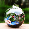 Image of Terrarium Ball Globe Shape Clear Hanging Glass Vase - KayZ Pro