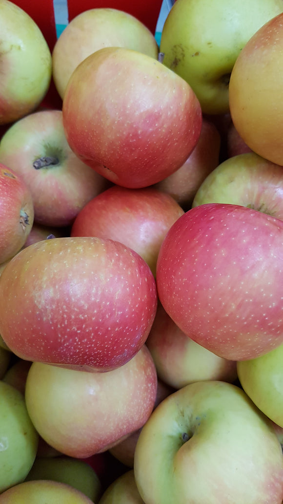 Apples BC Gala 3lbs Available
