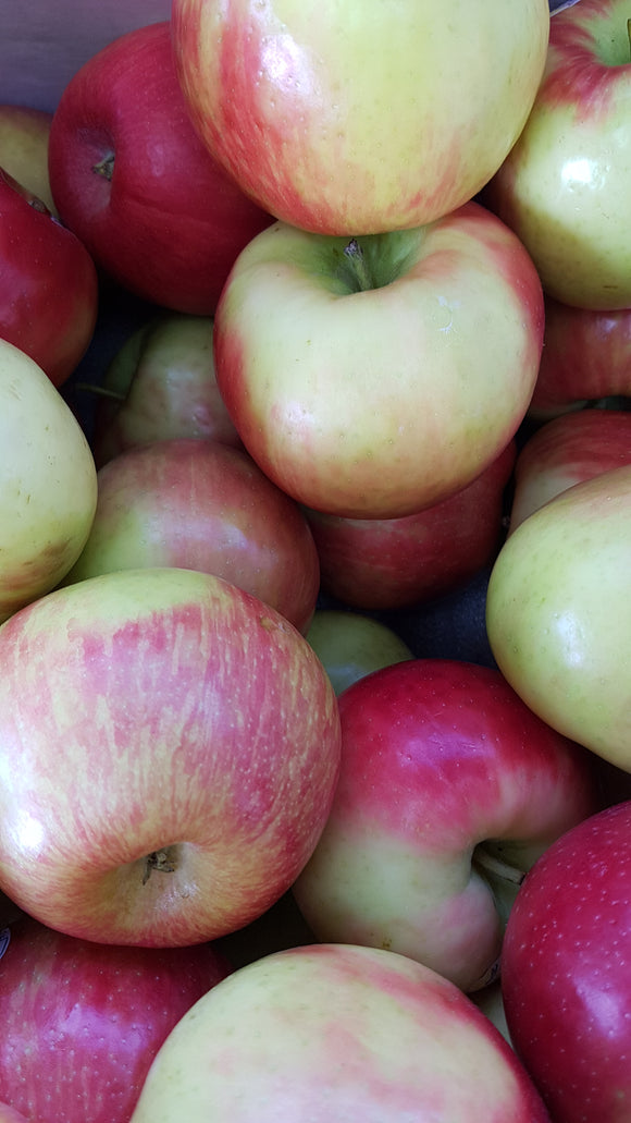 Apples BC Honeycrisp 3lbs AVAILABLE