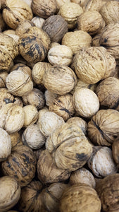 Walnuts - Raw in the shell BC