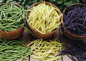 Beans - Green, Yellow, Purple