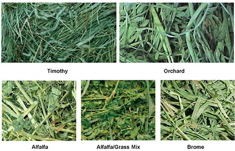 photos of different types of hay