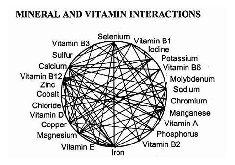 a chart showing how vitamins and minerals interact with each other