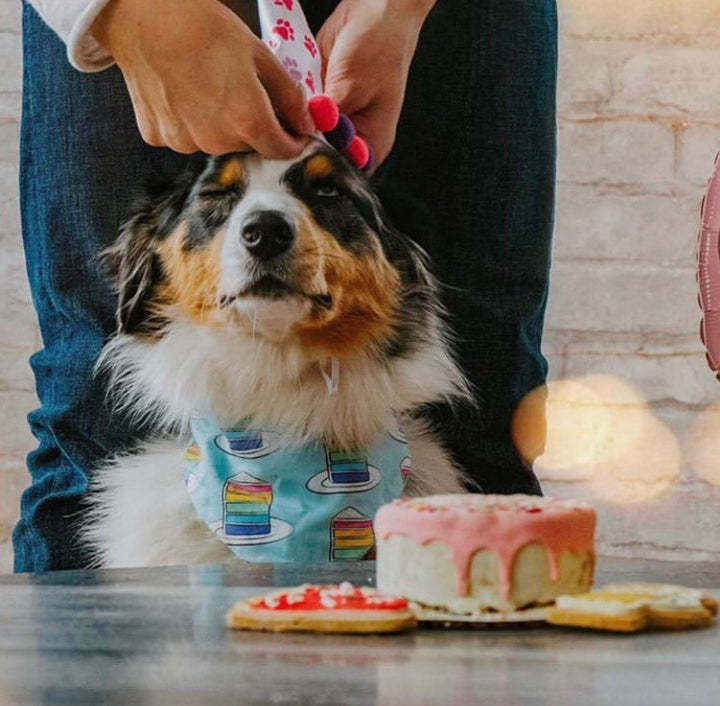 How Not to Celebrate A Dog's Birthday