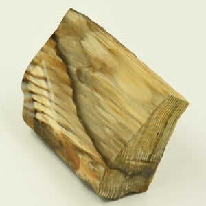 PETRIFIED WOOD - 528g