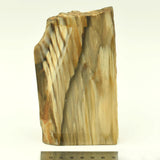 PETRIFIED WOOD - 528g 2