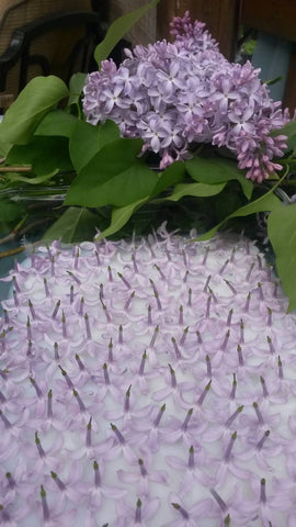 Image is a close up of fresh, evenly spaced lilac flowers laid flat upside down on a layer of fat about 2cm thick