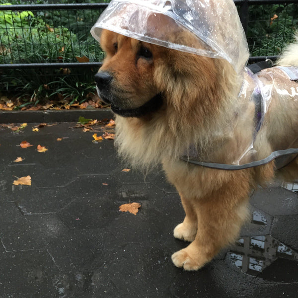Dog Rainwear - The Eight Senses™