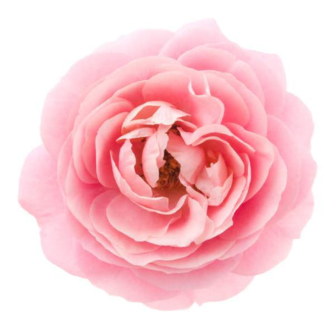 Rose Flower Extract