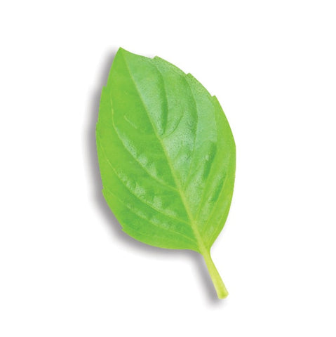 QUINCE LEAF EXTRACT
