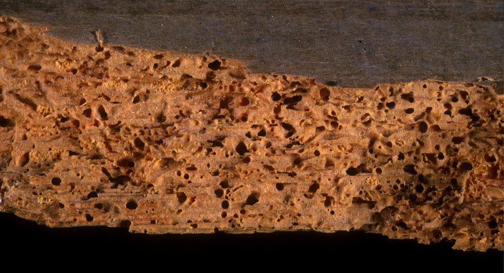 How to Treat Woodworm and Wood Boring Insects