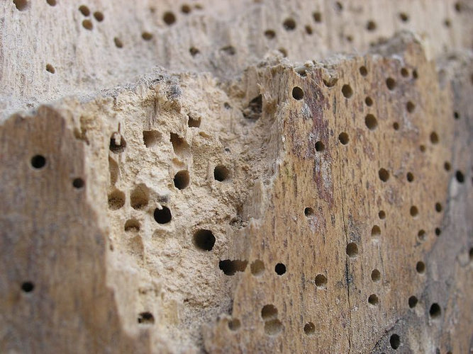 A Guide to Timber & Masonry Treatments