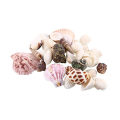 100g Strand Schelpen Mix Schelpen Shell Craft SeaShell Aquarium Nautische Decor