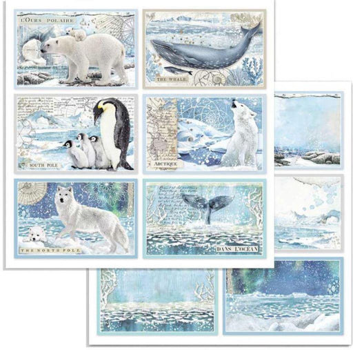 Stamperia - Arctic Antarctic Cards