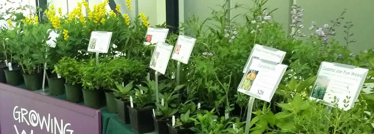 Plants set up to sell at the NC botanical gardens native plant festival
