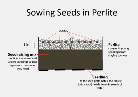 Diagram showing how to sow seeds in perlite