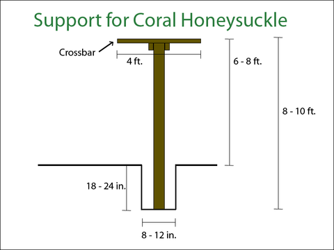 Diagram on building a simple support for growing a coral honeysuckle on